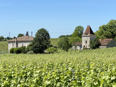 Restored Quercy house in organic wineyards